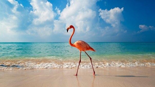 Ключевые теги. природа. море. птицы.