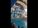 Шоу Ёлка на воде в бассейне Саратов