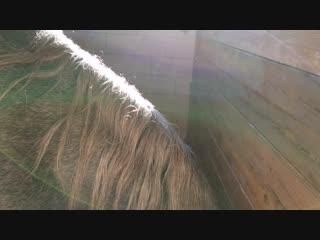 Бэллочка курит траву