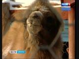 Животные получат права и законодательную защиту от жестокого обращения