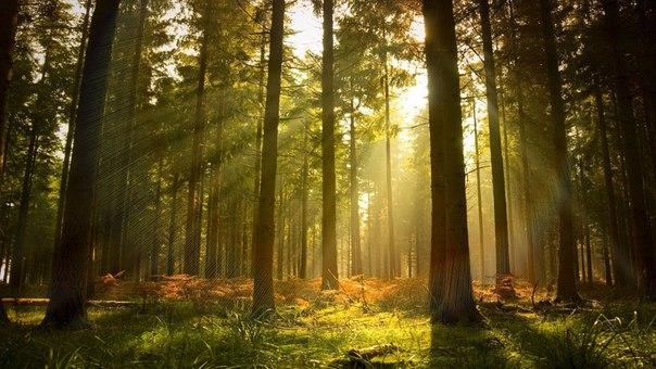 Для полного эффекта надень наушники, садись поудобней и, закрыв глаза, наслаждайся звуками природы.