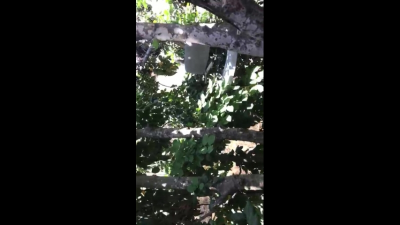 чувак в лесу 1
