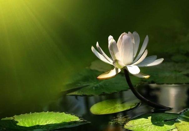 Сохраняйте душевный свет. Вопреки всему, не смотря ни на что. Это свет, по которому вас найдут такие же светлые души.