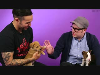 Fall out boy plays with puppies [cheeky]