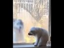 Кот умывается собака прыгает за окном mp4