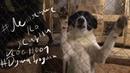 Летящие по жизни. VLOG001 - Подарки приюту для собак на новый год
