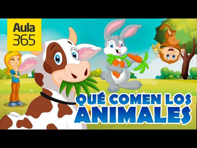 ¿Qué comen los animales Herbívoros Carnívoros Omnívoros Videos Educativos para Niños