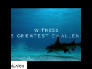 Raveena Tandon on Instagram Repost @paulnicklen with @get repost ・・・ Video by @TeamSharkwater
