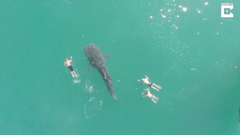 Китовая акула 😱