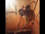 Пополнение в Казанском зоопарке