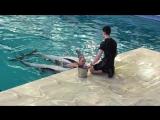 Дельфинарий. Плавание с дельфинами. Незабываемое ощущение. 25.02.2018