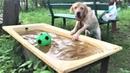Смешные собаки 2018 Приколы с Собаками ТОПовая подборка Funny Dogs Compilation 2018 1