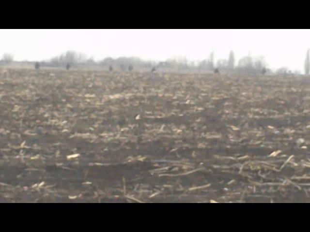 Украинский вертолёт высадил десант в поле. Краматорск. 15.04.2014