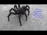 Напечатанный на 3D-принтере робот-паук. Оцените реалистичность движений