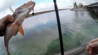 Как уговорить пасивного окуня Красноперка на силикон Рыбалка на ультралайт осенью
