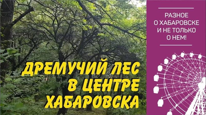 Дремучий лес в центре Хабаровска Питомник Шуранова