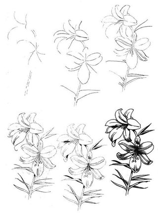 цветы карандашом поэтапно