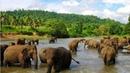 Классный фильм Шри Ланка Дикая природа National Geographic