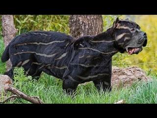10 самых редких пород собак на планете!