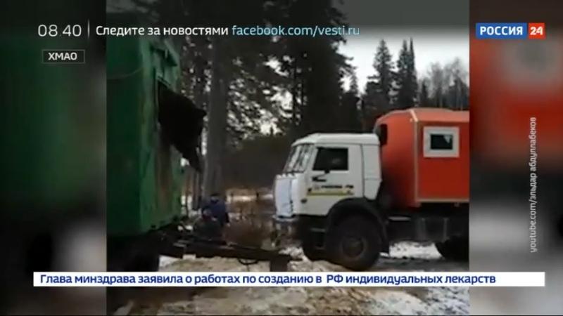 Новости на Россия 24 • Застрявшего в бытовке медведя вытянули КамАЗом