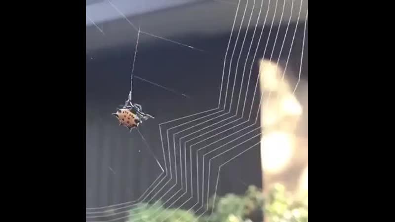 V как паук плетет паутину.mp4