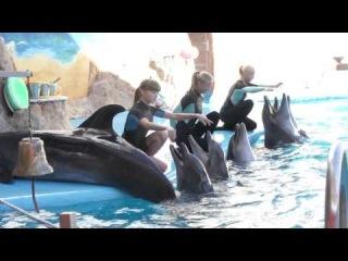 Помощник тренера дельфинов в Одесском дельфинарии Немо