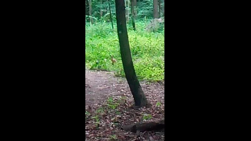 Заяц в Измайловском парке на Випассане