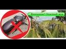Внимание Опасный жук Coconut Rhinoceros Beetle Hawaii Honolulu Oahu