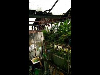 Оранжерея Ботаника в Зеленограде