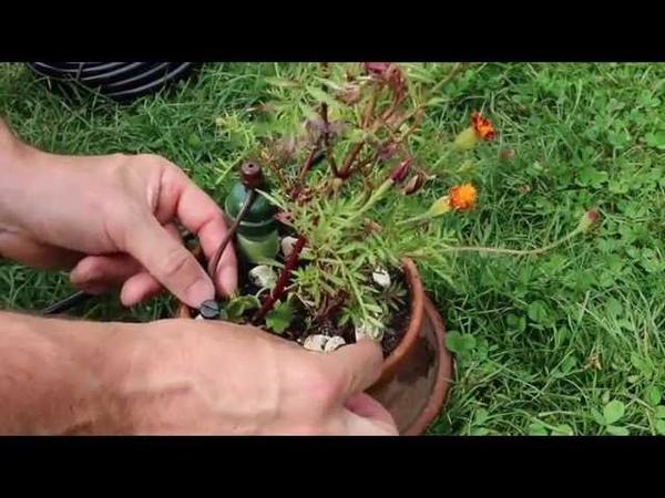 Tutorial Funktion Vorbereitung und Installation des Tropf Blumat Bewässerungssystems