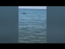 Клип про отдых в Крыму
