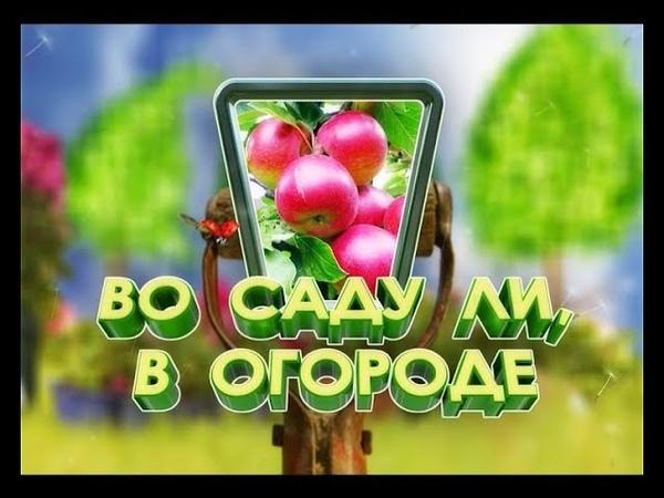 Полезные советы от ученого-агронома Алексея Жирнова