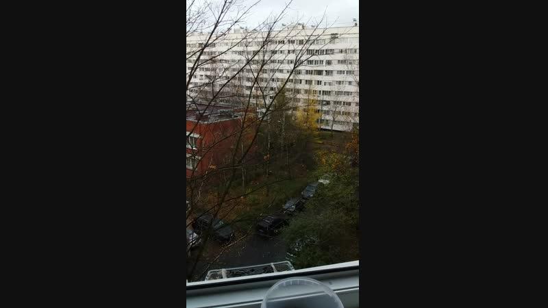 Птицы-синицы в моем окне.❤1.11.2018.