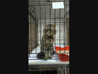 Привет от котиков Матроскина ❤️