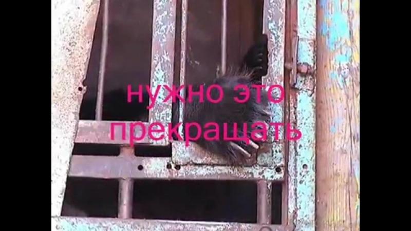 Цирк и животные. Вам весело А им - нет! Всероссийский конкурс. 1 место