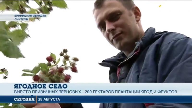 Село мечты- Село в Винницкой области получило второе дыхание благодаря ягодному бизнесу