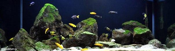 Конкурс дизайна биотопных аквариумов JBL 2014 KAoP8oV7rEM