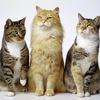 Мурчики: общество любителей кошек