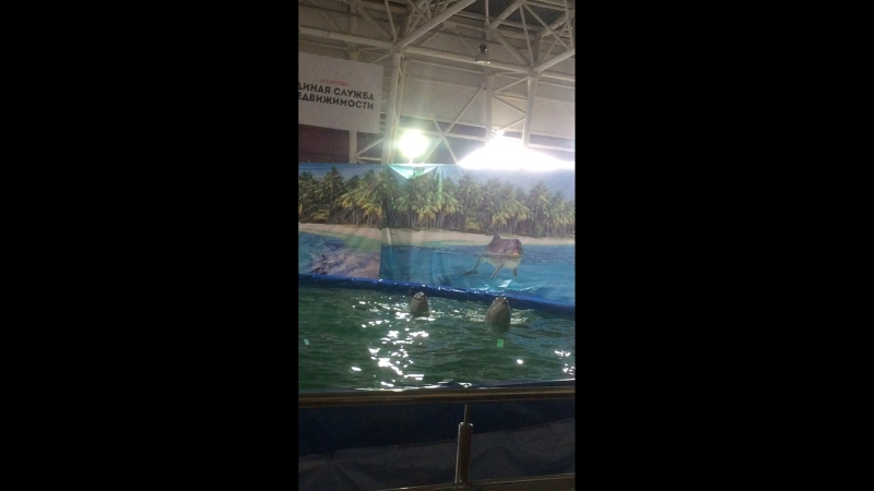 Дельфинарий Шоу Белых Китов