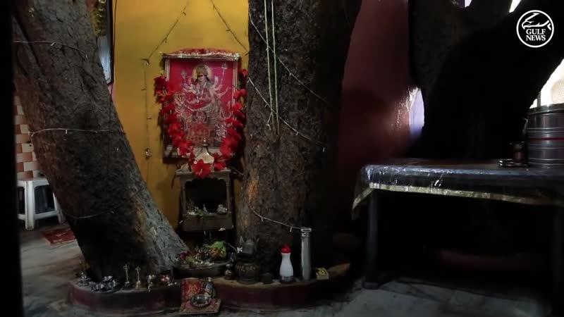 Семья из Индии построила себе дом, внутри которого находится очень большое дерево