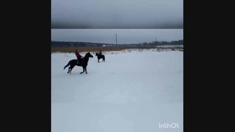 Amazing horse 🐴