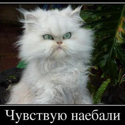 Роман Суетин, 24 августа 1983, Нижняя Салда, id108244091