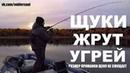 Щуки Жрут Угрей Размер Приманки для Осенней Щуки Рыбалка на Озере Октябрь 2018