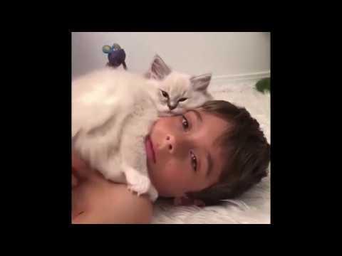 Ласковые Кошки - Обнимашки. День объятий