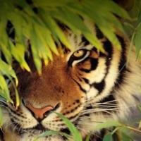 Tara Tiger, 15 апреля , Одесса, id206408362