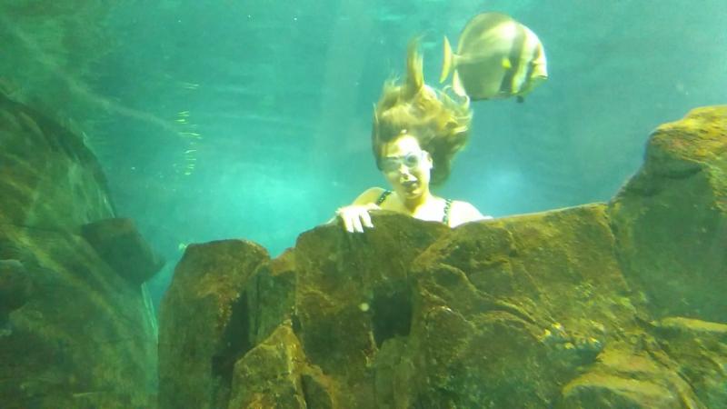 Шоу русалок в океанариуме » Freewka.com - Смотреть онлайн в хорощем качестве