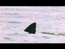 5.1 Shark attack