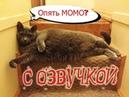 Приколы с котами – Смешная озвучка животных – кот Мурзик и МОМО! Ржака до слёз - PSO