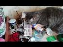 Кот Наркот ч1