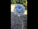 Нежно голубой пион